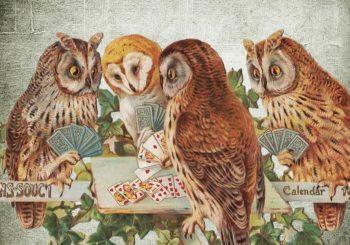 Owls Playing Bridge - Great Bridge Links