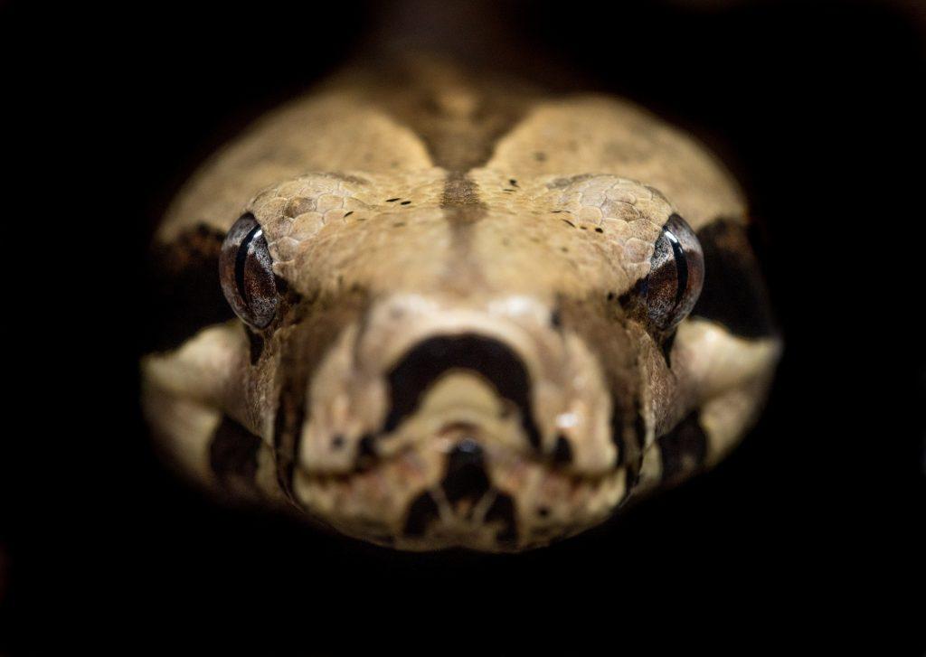 Anaconda from the Basement