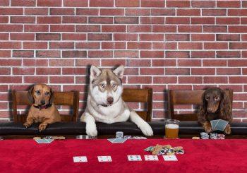 3 Unusual Casino Card Games - Great Bridge Links